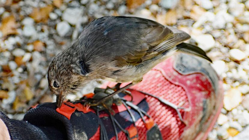 フレンドリーな小鳥にも出会えるかも!