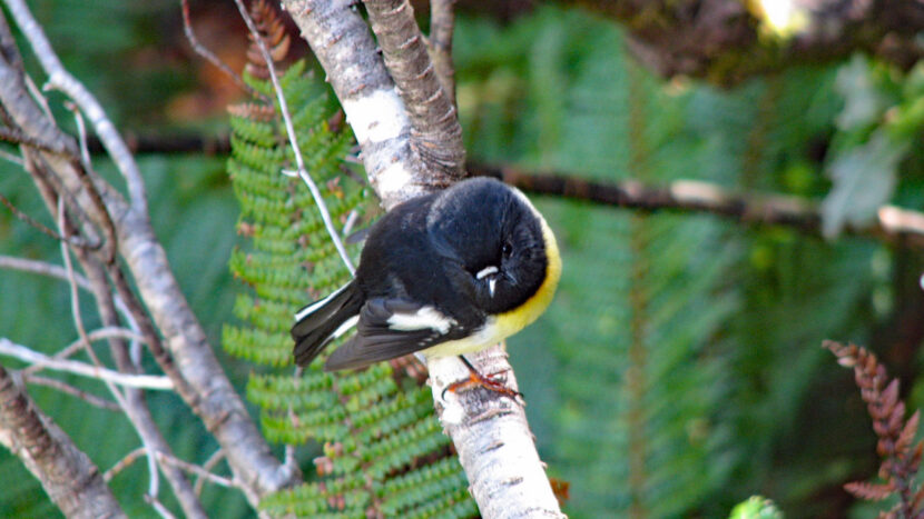 ガイドが見つけた可愛い野鳥