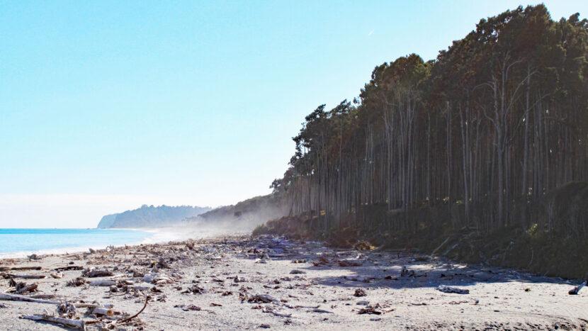 海岸線と原生林がぶつかり合う