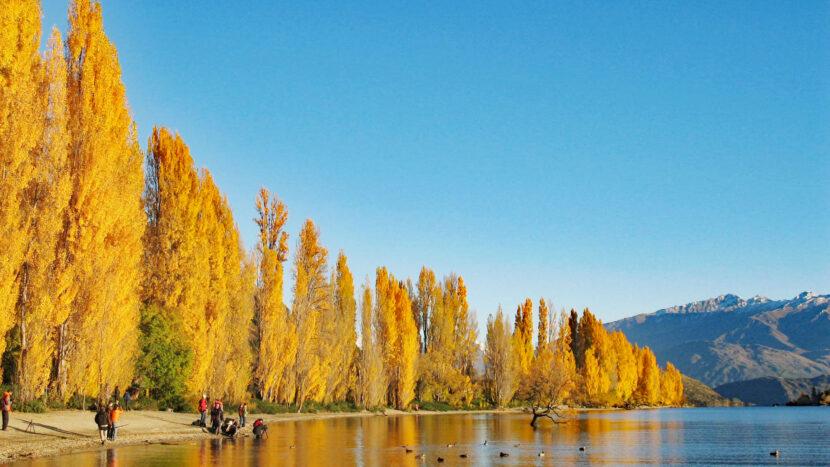 ワナカ湖畔は秋の黄葉でも有名