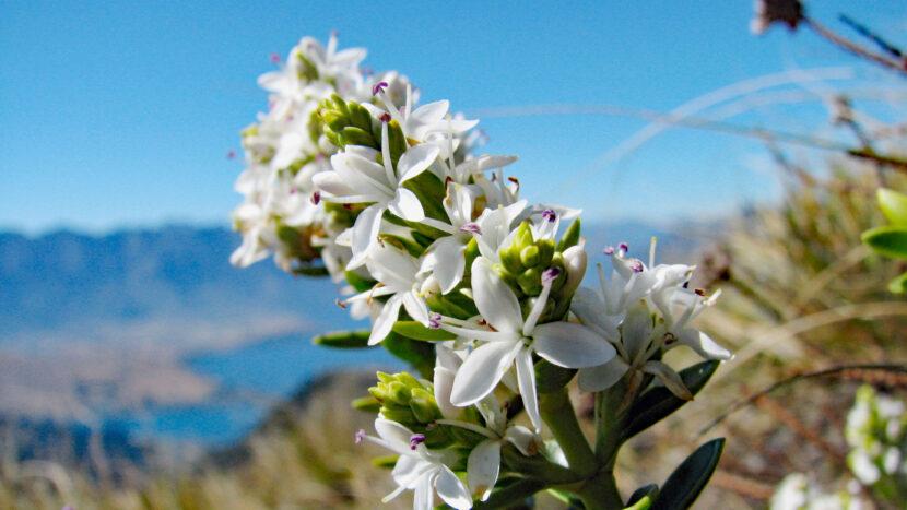 夏には高山植物の花が見られます