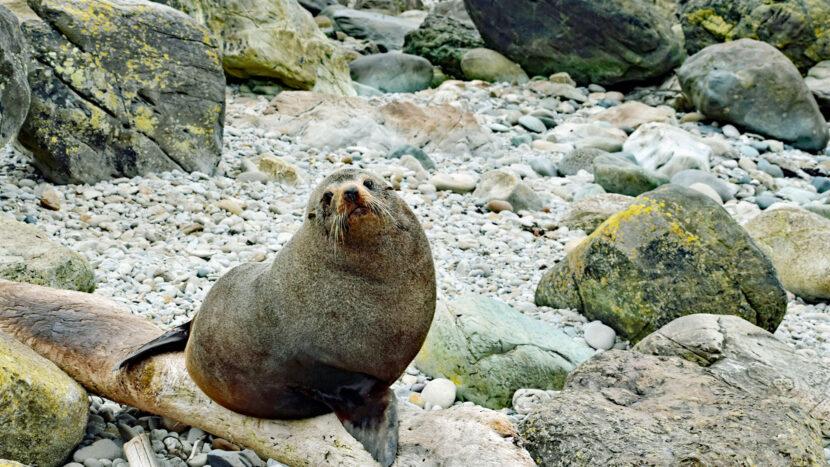 NZの野生動物を見るオプションもございます
