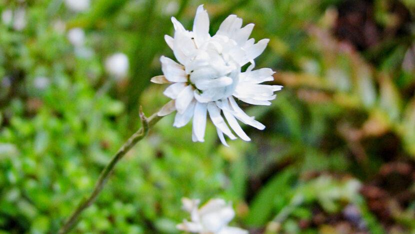 登山道の脇にも小さな花が!