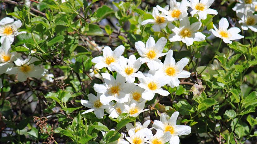 早春は花が最も多い季節