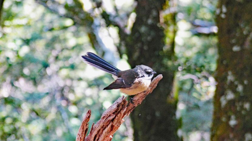 ガイドと一緒に野鳥観察